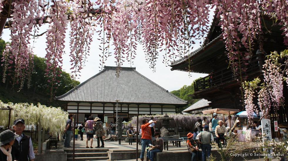 travel-fuji-img4