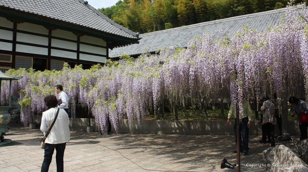 travel-fuji-img3
