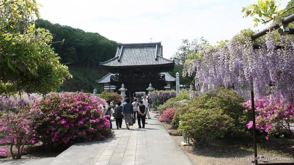 travel-fuji-img2